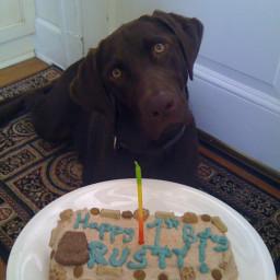 Terrific Dog Birthday Cake Funny Birthday Cards Online Chimdamsfinfo