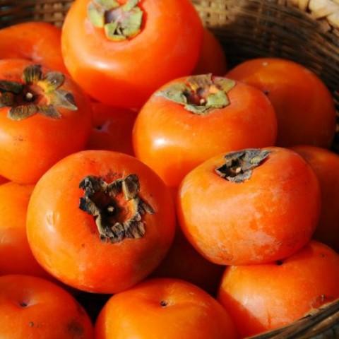 January Fruits