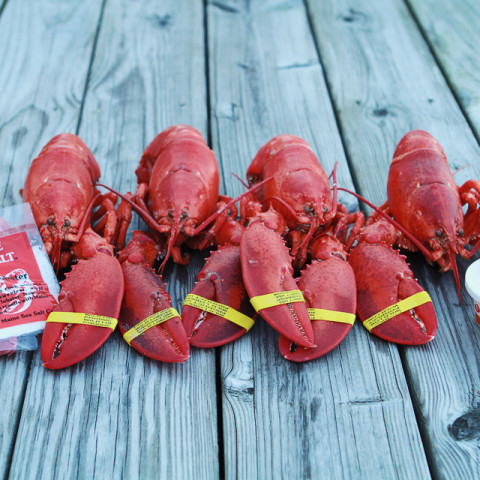 Perfectly Steamed Maine Lobster