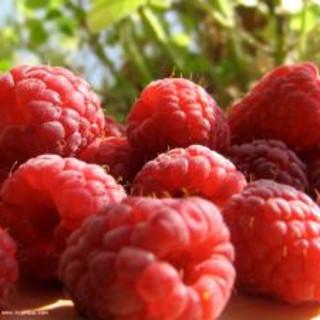 Raspberry Maple Bibb Salad