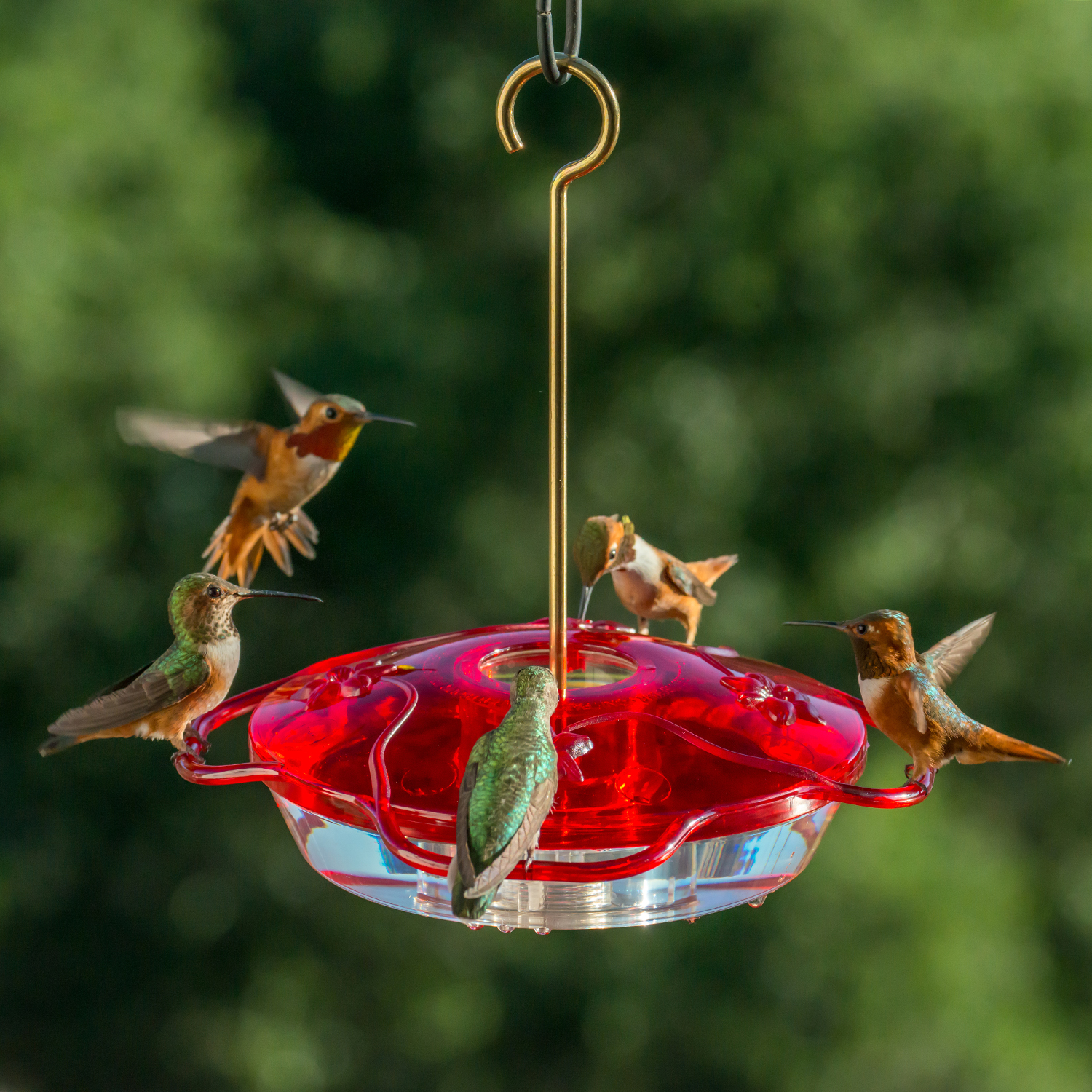 Homemade Hummingbird Food Recipe