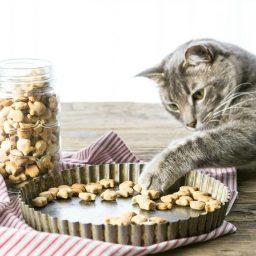 3 Ingredient Salmon Cat Treats