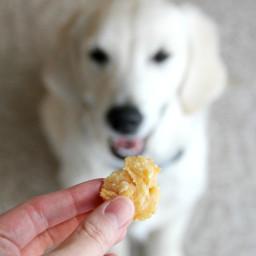 Chewy Cheddar Puppy Puffs