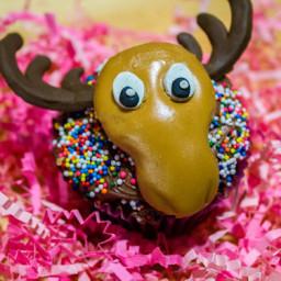 Chocolate Moose Cupcakes