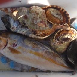 complete-mediteranian-sushi-meal-4.jpg