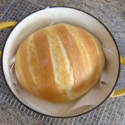 Easy No Knead Dutch Oven Bread