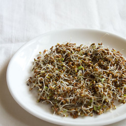 how to make alfalfa sprouts