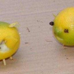 Lemony Pigs