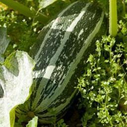 marrow-potato-and-sage-soup-2382409.jpg