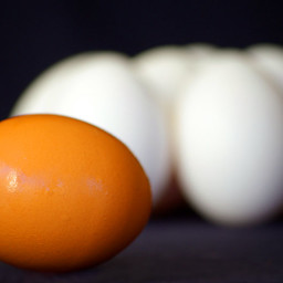 Natural Egg Shampoo Recipe