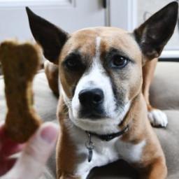 Oat, Banana, Carrot, and Parsley Dog Treats