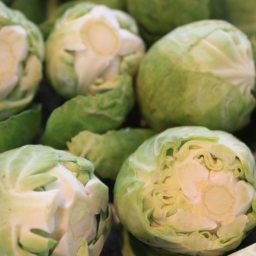 PLAIN JANE STEAMED BRUSSELS