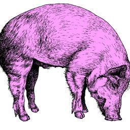 Pork Main-Dish