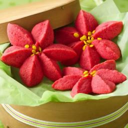 Raspberry Poinsettia Blossoms