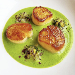 Seared Scallops in Zucchini & Sumac Puree