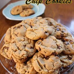 Sunbutter Chocolate Chip Cookies