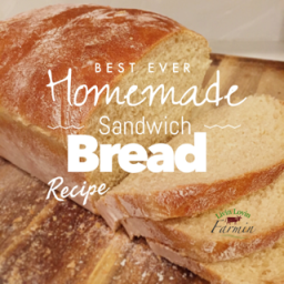 Super Easy Whole Wheat Sandwich Bread