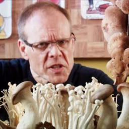 The Fungal Saute