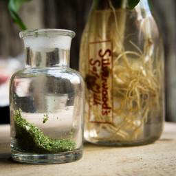 Wild Leek Powder Recipe (Dehydrator Recipe) aka Ramps