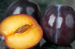 stone-fruits