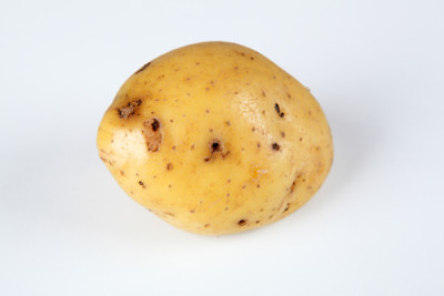 Waxy Potato