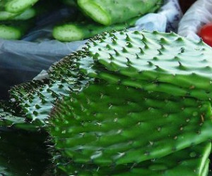 Cooking with The Prickly Pear Cactus