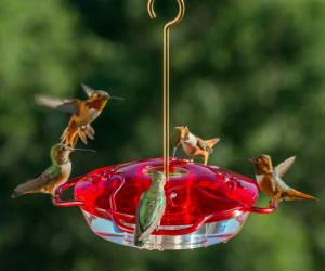 hummingbird food homemade - Homemade Hummingbird Food