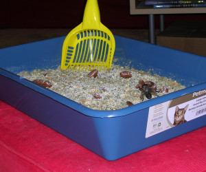 Kitty Litter Cake (Spice)
